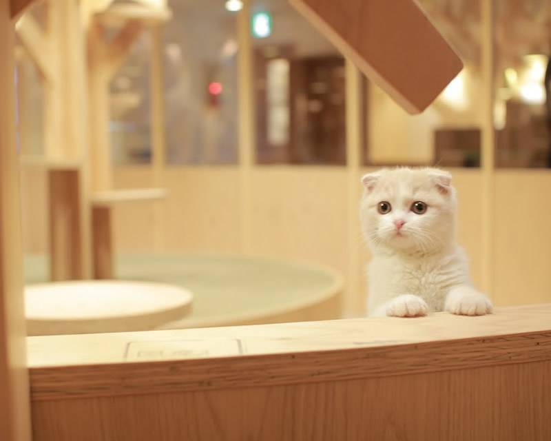 猫カフェMoCHA池袋西口店 .jpg