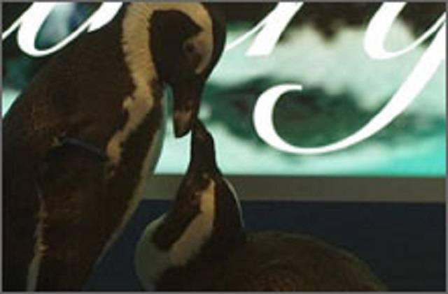 ペンギンのいるBAR池袋.jpg