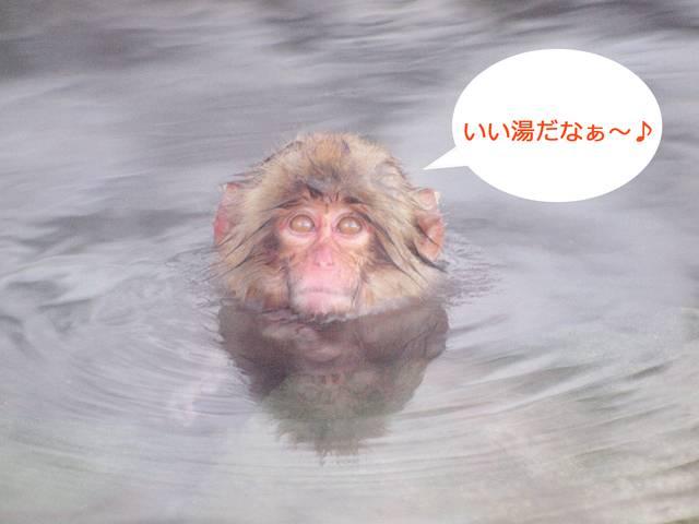 長野・地獄谷野猿公苑に温泉サルを求めて
