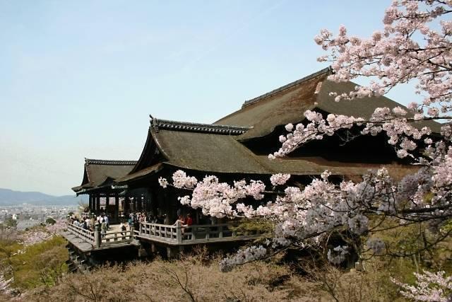京都(桜).jpg