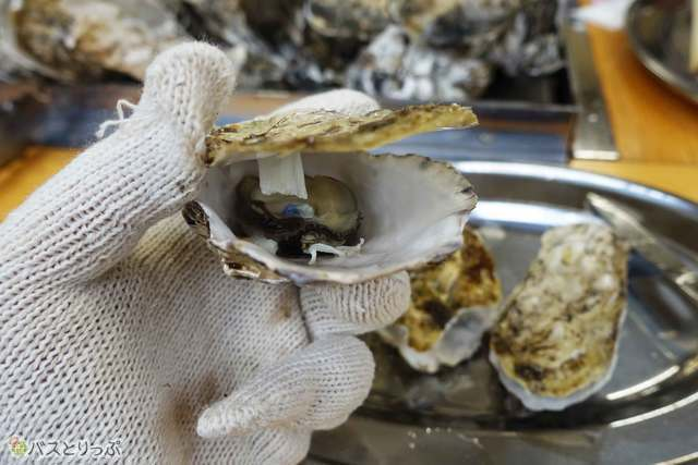 さぁ牡蛎祭の始まりだ!