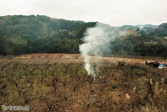 風情がある焚火や野焼きをいくつか見かけました