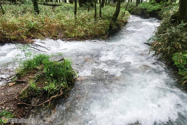 濁流、濁流、水たまり・・・!