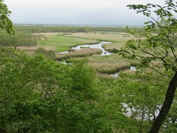 釧路湿原(写真提供:クスリ凸凹旅行舎)