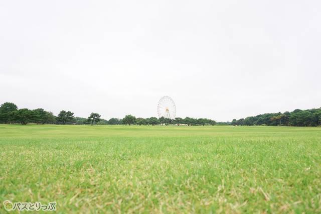 「大草原」から見た「大観覧車」。400m以上の美しく手入れされた芝生が広がっている