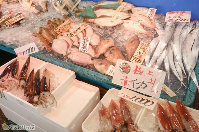 太刀魚、本当に太刀のよう!