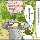 続いて「伊豆の小京都」と呼ばれる修善寺の名所。竹林の小径を通って…