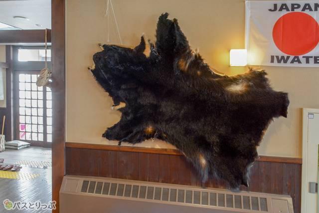 ワイルドな熊の毛皮