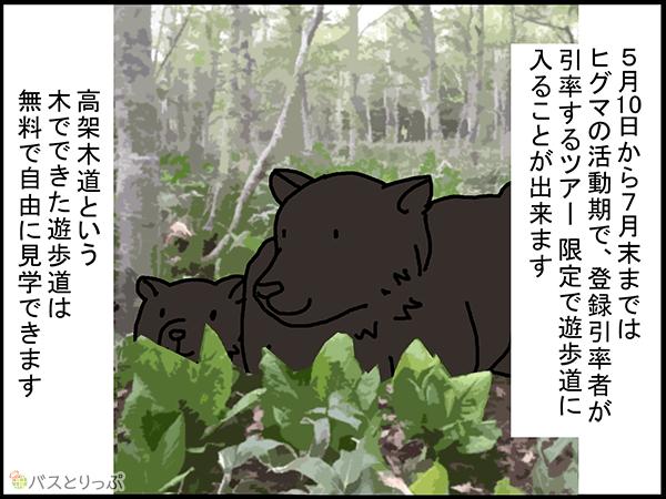 5月10日から7月末まではヒグマの活動期で、登録引率者が引率するツアー限定で遊歩道に入ることが出来ます。高架木道という木でできた遊歩道は無料で自由に見学できます。