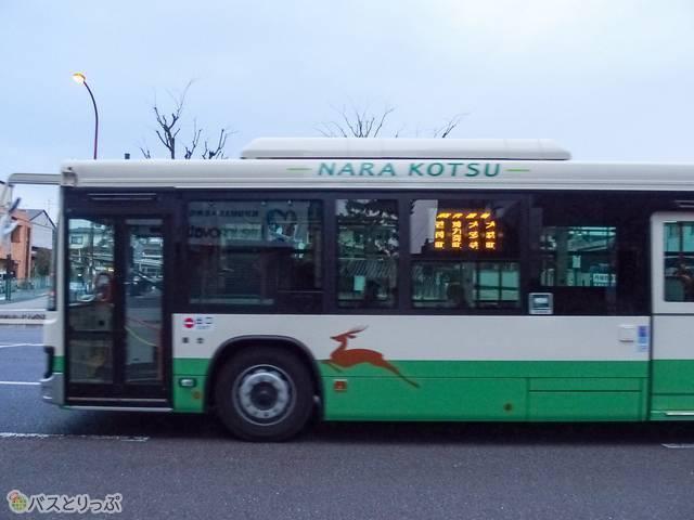 バスにも走る鹿。このあと何台もすれ違った.JPG