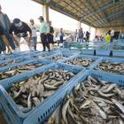 伊良湖魚市場