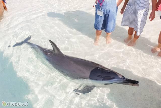あそびーちエリアのイルカ