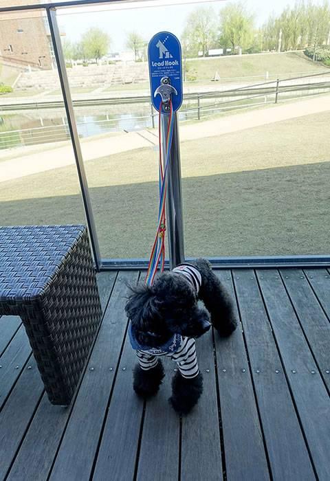 テラス席ではペットも一緒に、天門橋を眺めながらコーヒーをたのしめる(世界一美しスターバックスコーヒーでモーニングを)