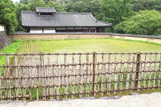 石畳の裏参道(東大寺&興福寺)