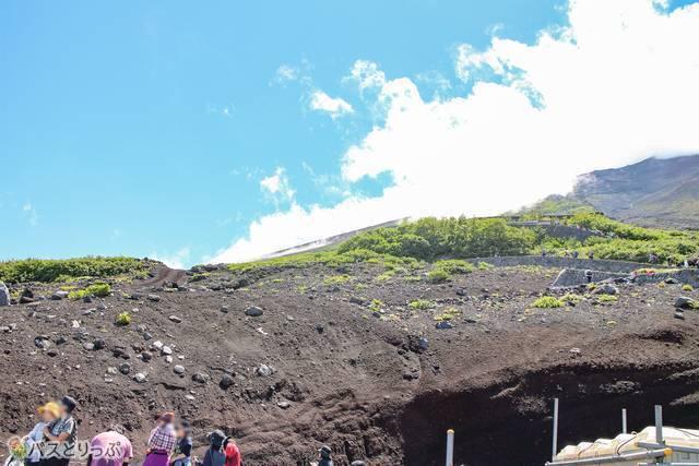 登山道沿いの高山植物