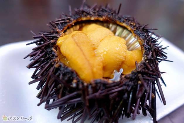 新鮮なウニもいただけます(金沢グルメを堪能 行列の「メロンパンアイス」と近江町市場の美味しい「回転寿司」)