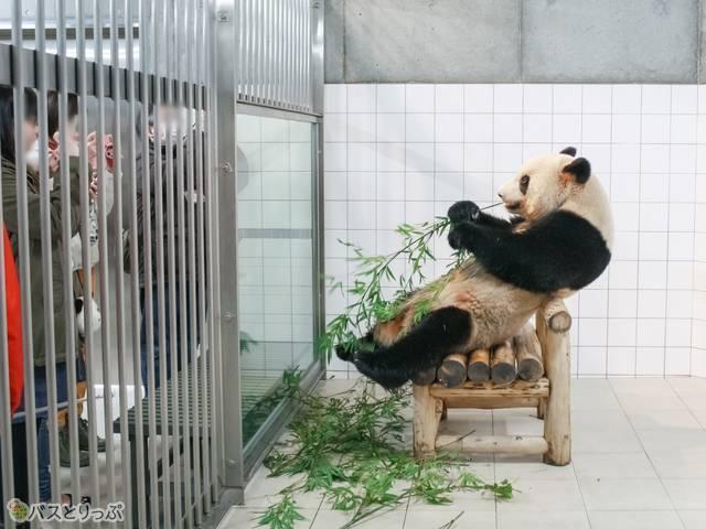 記念撮影中のパンダ(西武観光バス「白浜ぱんだぱす」旅行記)
