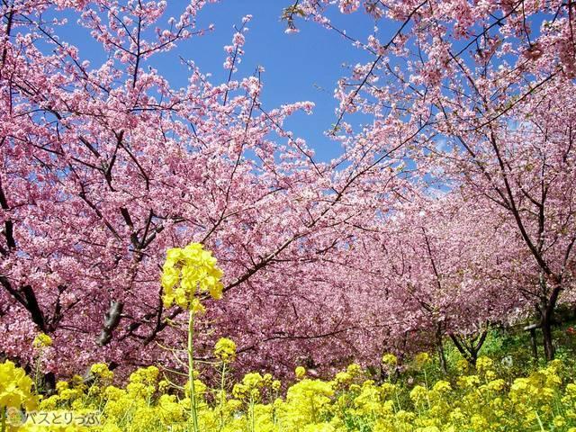 2月でも春満開!(満開時に撮影)