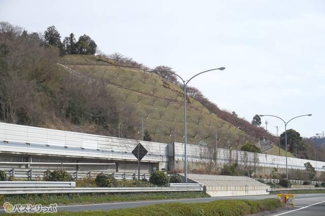 東名松田・下り線バス停から見た西平畑公園
