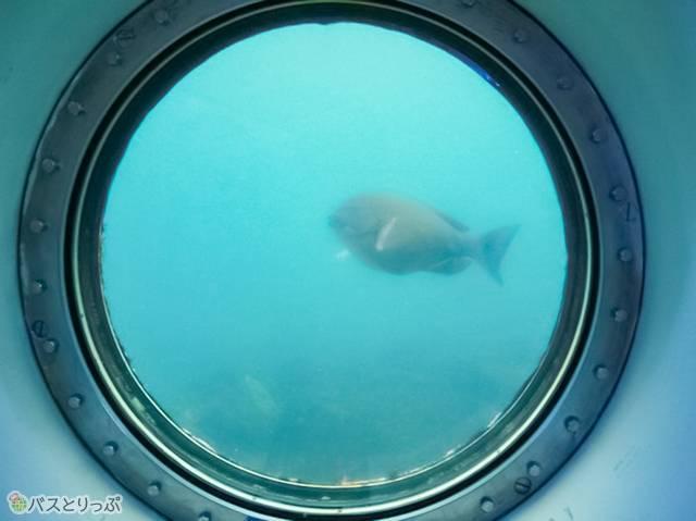 海の中を泳ぐ魚が見える!(白浜海中展望塔・三段壁)