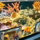 海底で生活する海綿動物たち!(京大白浜水族館)