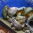ちょっ、、、怖ッ!!(京大白浜水族館)