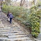 鈴虫寺の石段が見えてくる