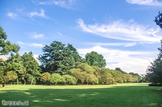 新宿御苑の中には広い野原と木々がいっぱい