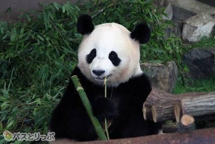 パンダだけではない? イルカや野生動物たちにも会える「アドベンチャーワールド」は心ときめくSmile(スマイル)テーマパーク