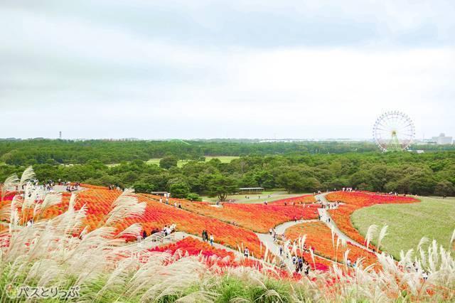 みはらし丘から見える秋の季節.jpg