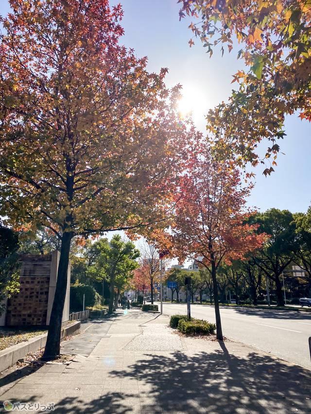 バス停周辺は秋だと紅葉が楽しめました!