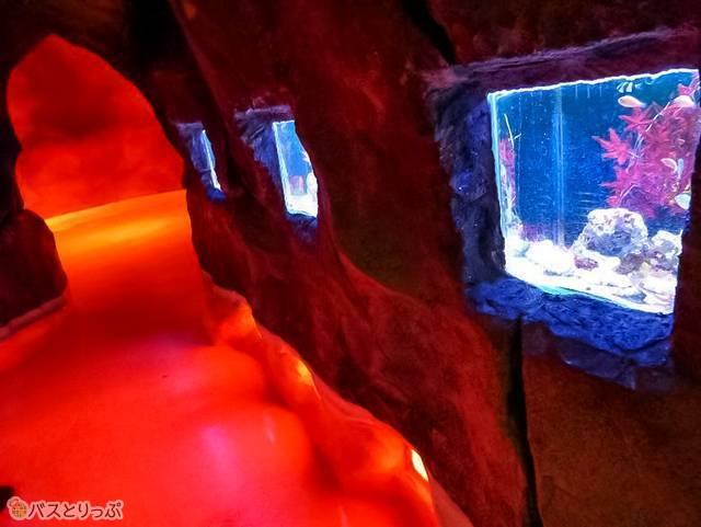 海洋生物をほぼ死滅させたはずのセカンドインパクトながら、ユネッサンでは水槽の魚も鑑賞できる。感慨深い…