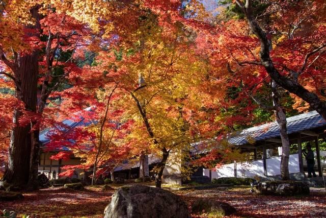 永源寺の紅葉(イメージ)