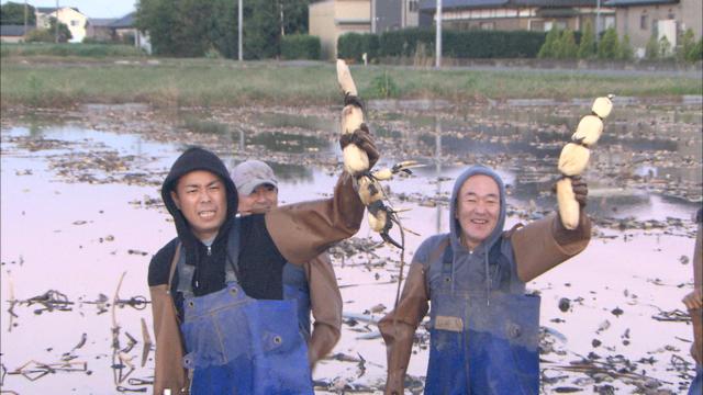 レンコン収穫.png