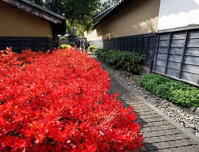 紅葉に彩られた小道