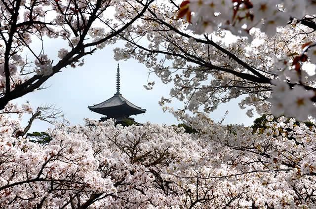 20160320_izumo_10.jpg