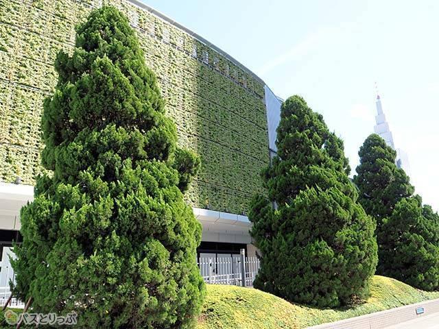 「緑の壁」があるサザンテラス側
